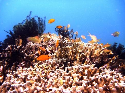 Rich marine life