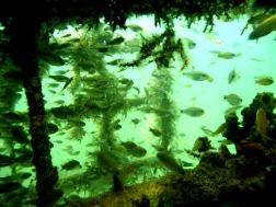 Rich fish life at AR