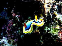 A nudibranch!