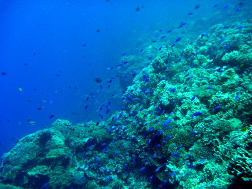 Healthy reefs