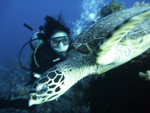 Petting the hawksbill!