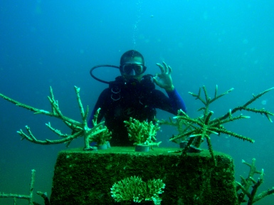 Planted corals on substrates
