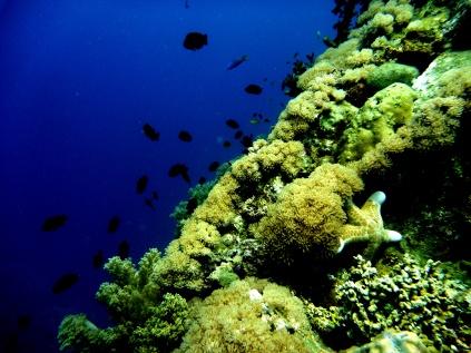 Camiguin Island Underwater Paradise