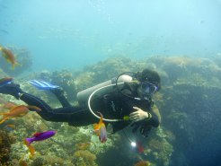 Colored fishes within your reach, Balicasag Island!