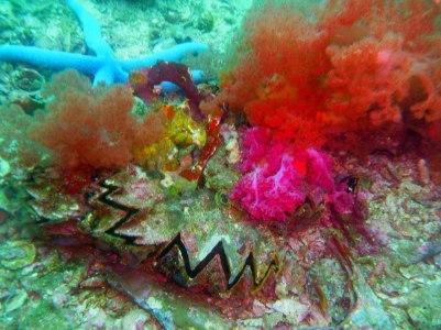 Teeming with marine life!