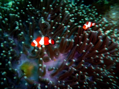 The perennial clown fish was there to welcome us!