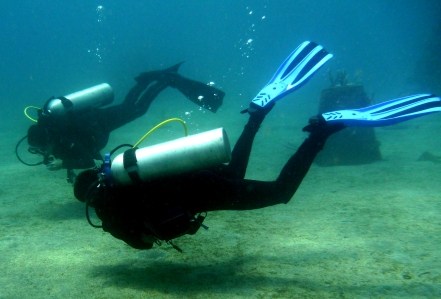 Dive buddies stick to each other