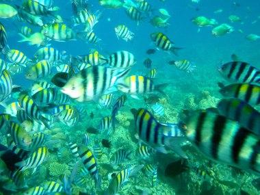 Active marine life in Siete Pecados Marine Sanctuary