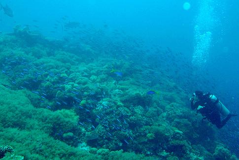 Marine Paradise