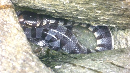Sea snake sleeping in its chamber