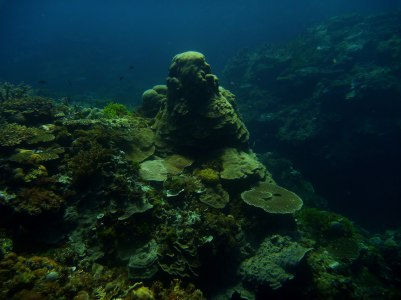 Mound filled with soft and hard corals