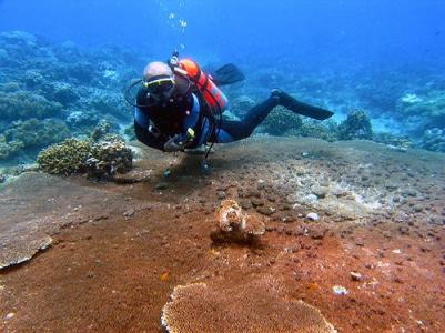Punta_Diwata_Reef