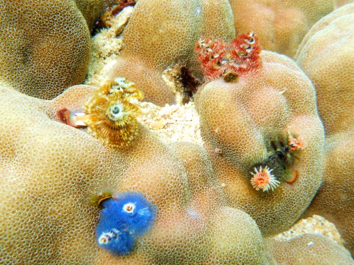 blue, yellow, orange worms