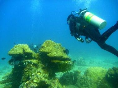 Lapinig Island is surprisingly rich in marine life