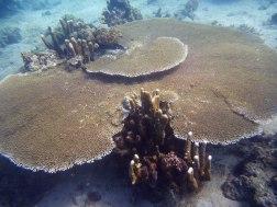 Amazing marine world...