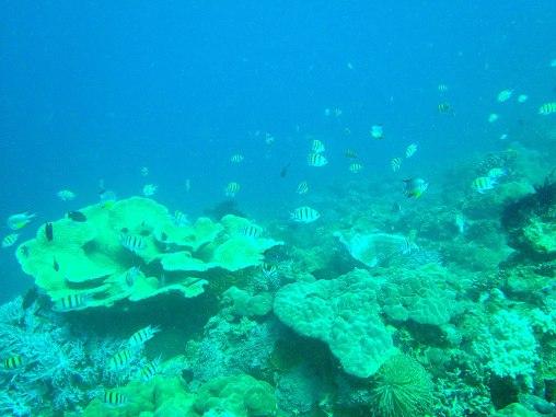 Fish life in Mabua depths