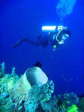 The marine life outside the Blue Hole