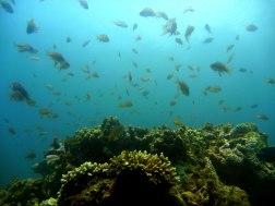 Active fish life in Pescador Island