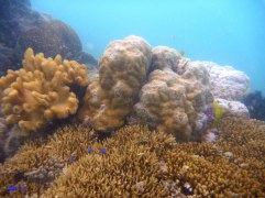Recovering from Typhoon Haiyan destruction - Pearl Island depths scenery