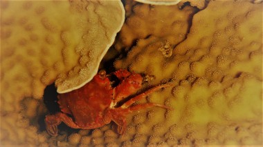 A crab during night dive