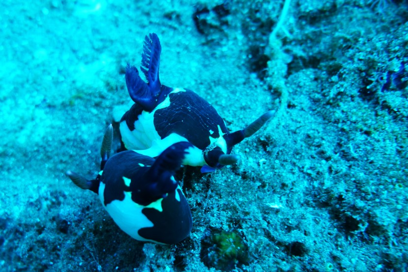 A Nudibranch toKnow