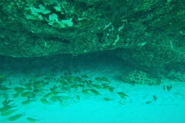 Cardinals & goliath grouper in a cavern