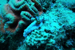 New sighting of this nudi specie