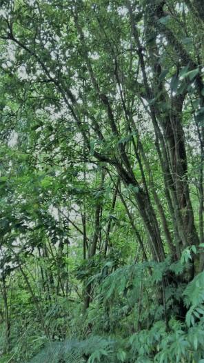 Thick foliage & trees...